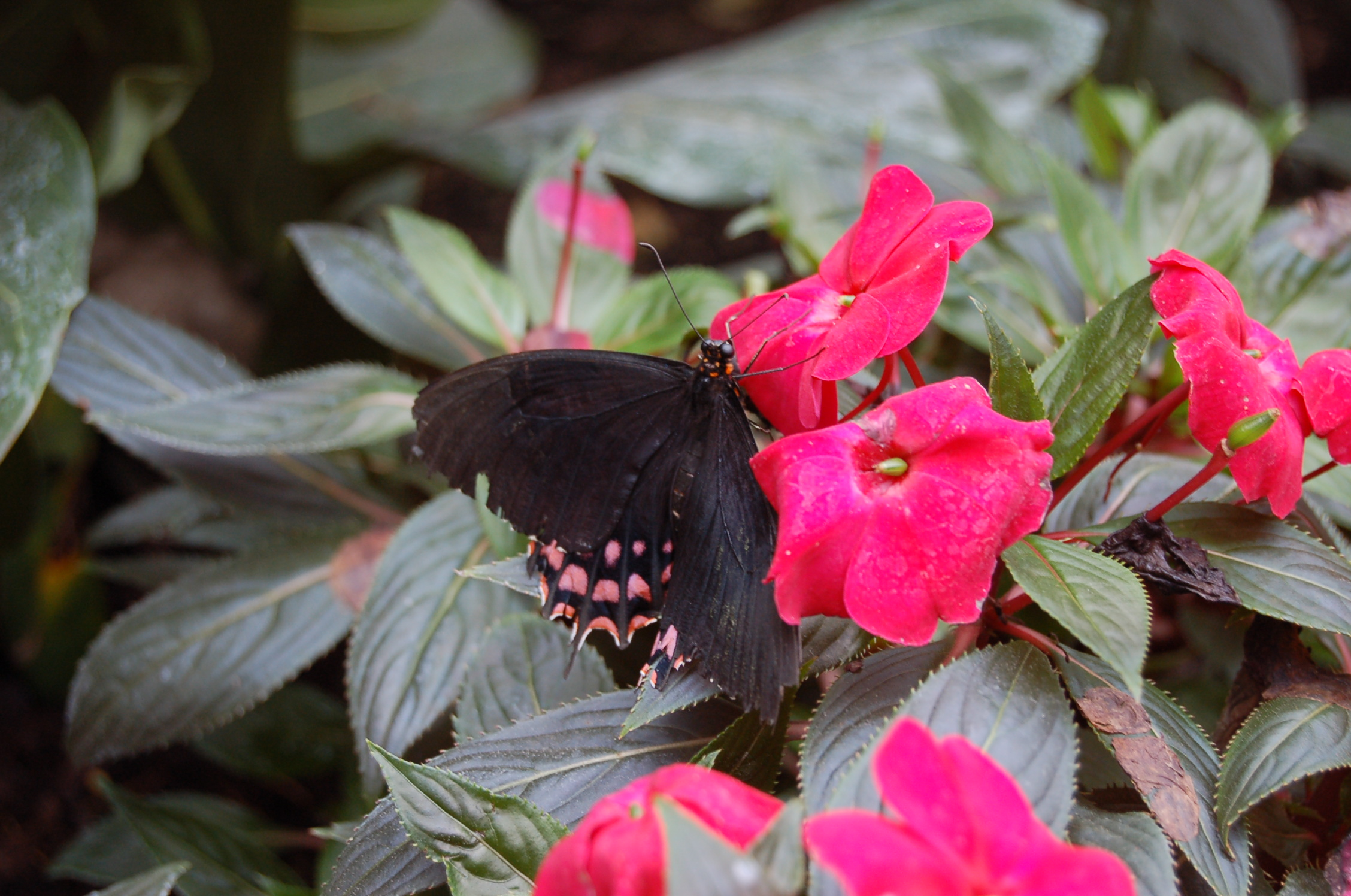 Some of the numerous butterflies we saw