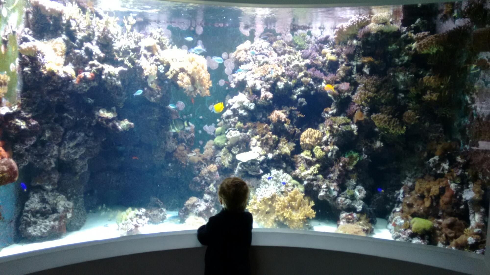 Aquarium at the Horniman Museum